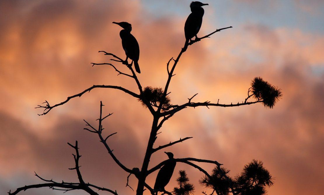 Zachód słońca w rezerwacie Kąty Rybackie, fot. W.Woch