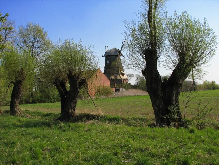 Krajobraz Żuław