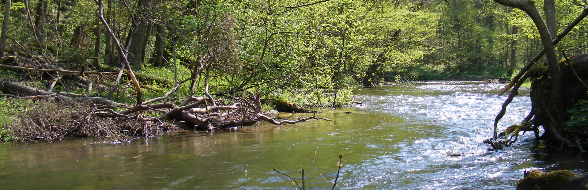The Radunia river water trail