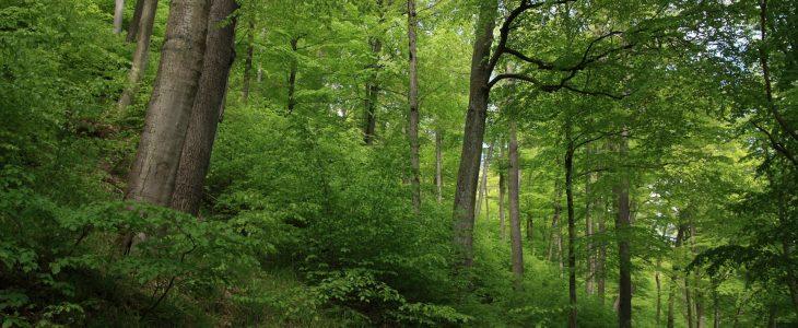 The Tri-City Landscape Park