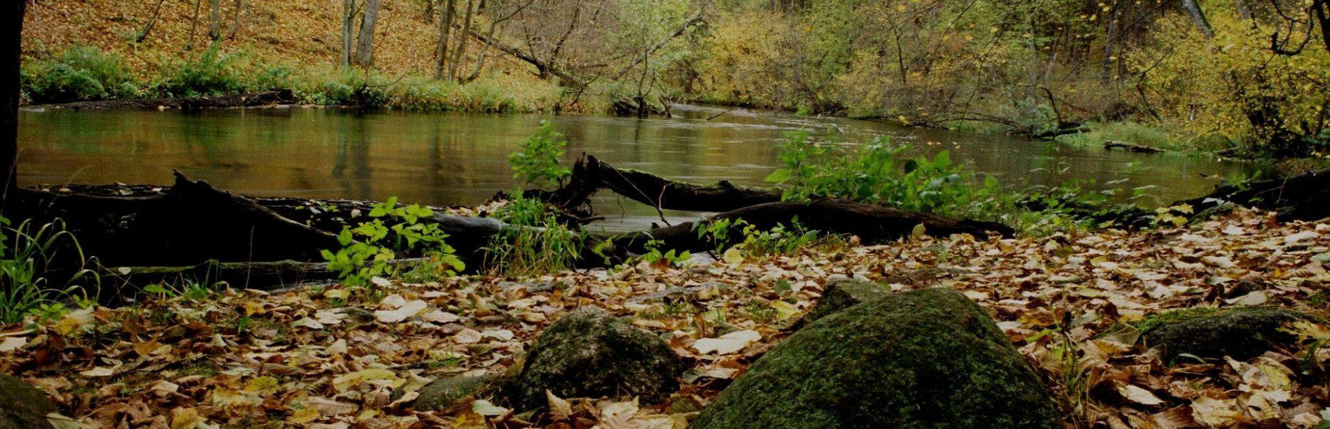 Tucholski Park Krajobrazowy (ścieżki przyrodnicze)