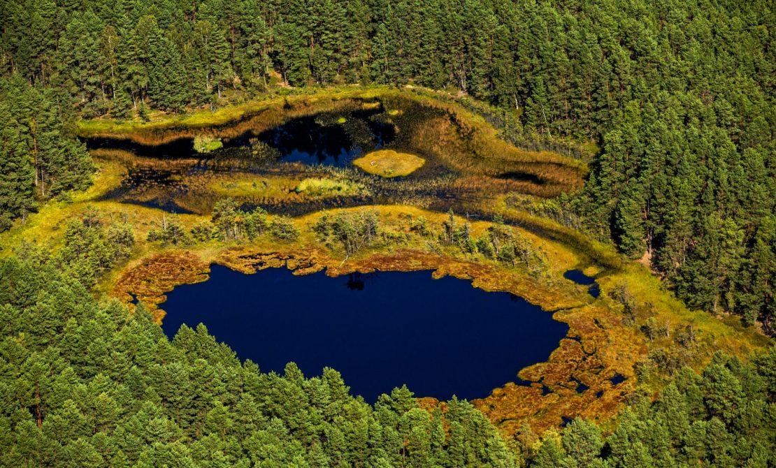 Wdzydzki Park Krajobrazowy, rezerwat przyrody 'Motowęże' fot.Wojciech Zdunek