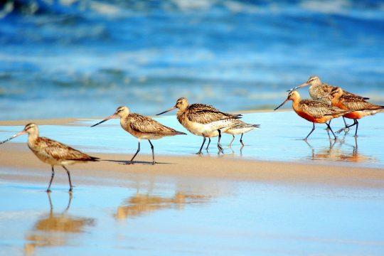 ptaki, fot. P.K Mierzei Wislanej