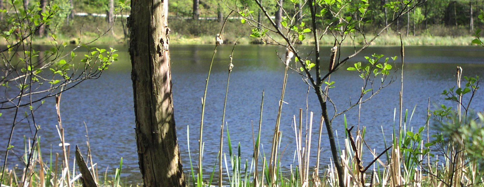 """Park Narodowy """"Bory Tucholskie""""  (ścieżki przyrodnicze)"""