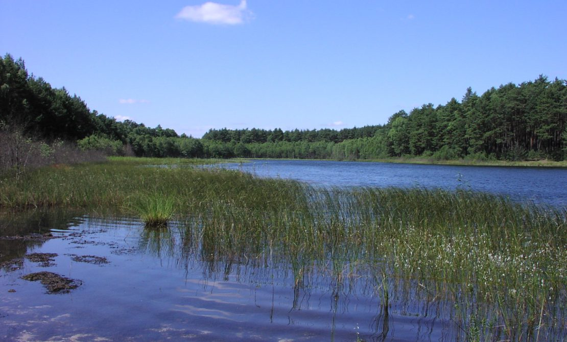 Park Narodowy Bory Tucholskie, jezioro lobeliowe, fot. Beata Grabowska