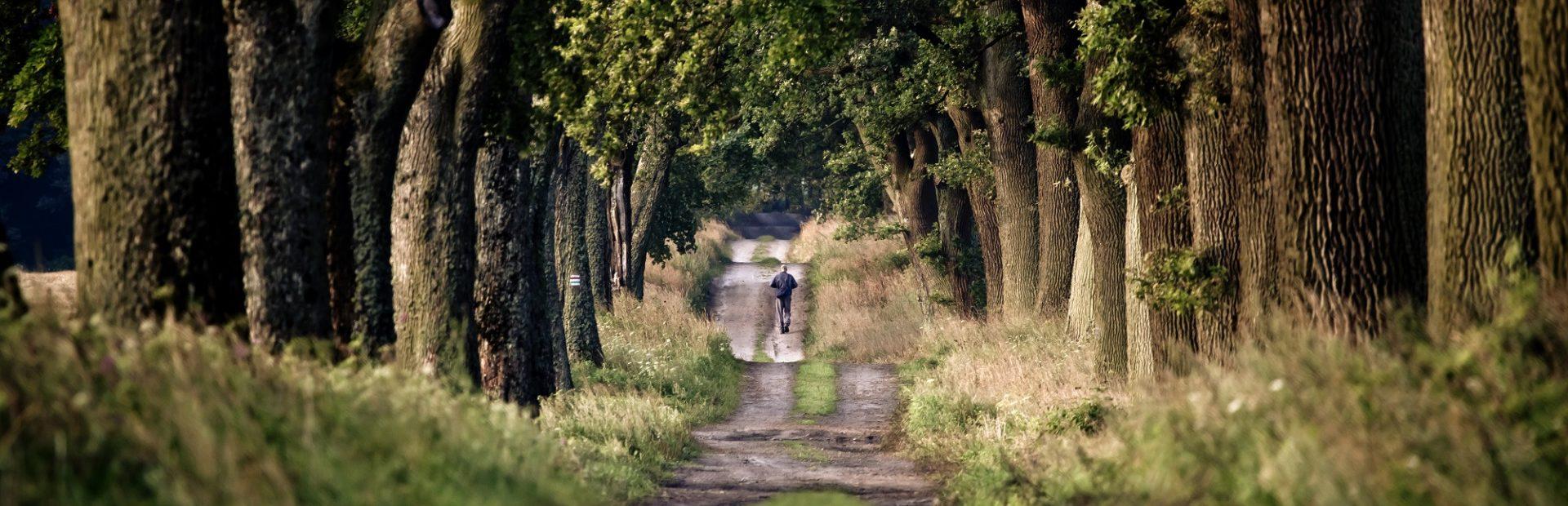 Park Narodowy Bory Tucholskie – tourist routes
