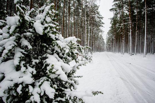 Kaszuby zimą, fot. Pomorskie Travel/M. Ochocki