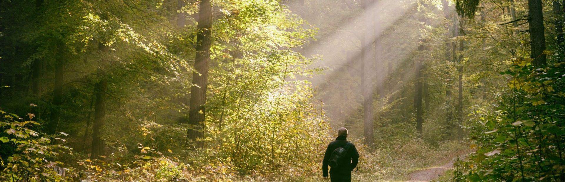 Bory Tucholskie – Gdzie piękno przyrody zapiera dech w piersiach