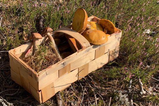 grzyby koszyk, fot. PROT, materiały kulinarne