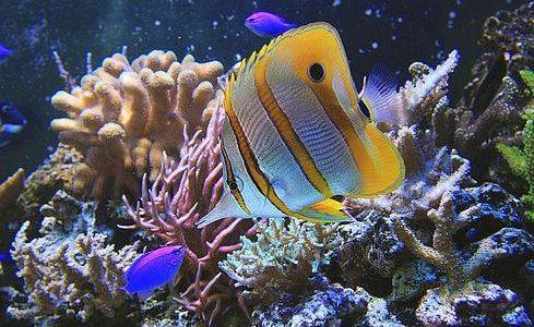 The Aquarium in Gdynia