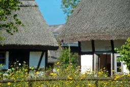 chaty w muzeum wsi slowinskiej w klukach