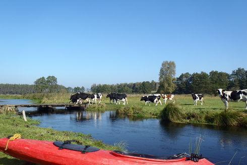Chocina – Rzeka tysiąca mostków