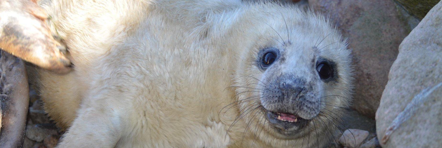 Seal Aquarium – the marine station in Hel
