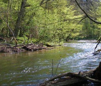 The Radunia River Gorge