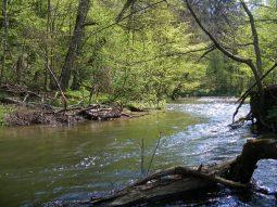 jar rzeki radunia