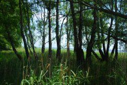 jezioro lebsko 1