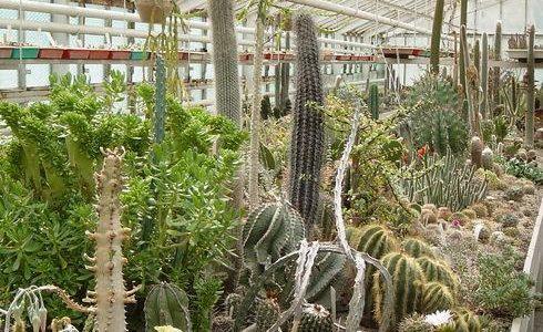 The Cactus Farm in Rumia