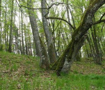 The Krzywe Koło w Pętli Wdy Nature Reserve