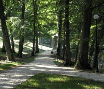 Lasek Luizy w Człuchowie