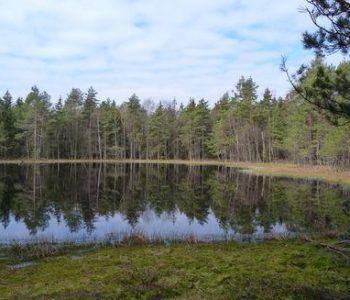 Leśne Oczko