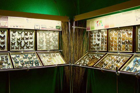 The Museum of Butterflies in Łeba