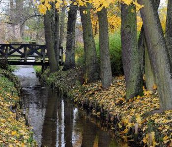 Park wiejski w Kobylnicy