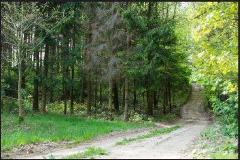 Szemud: trasa nr 34 Szemud (czarna) Lesocka