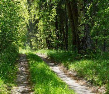Trasa nr 1 Kopalino (zielona)