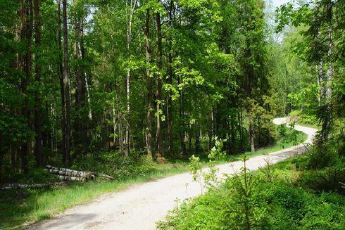 Route no. 11 Dąbrówka (black)