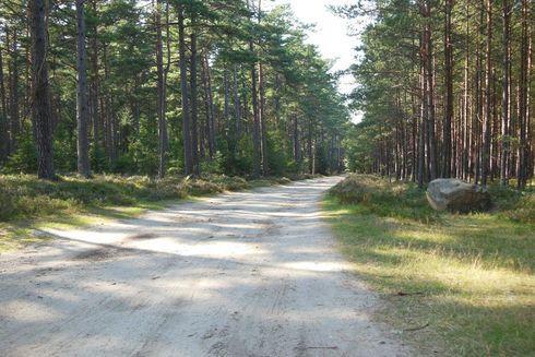 Route no. 12 Białogóra (yellow)