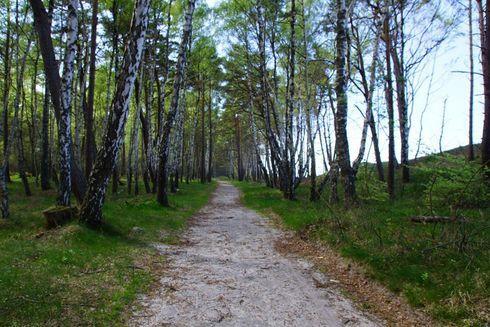 Trasa nr 2 Kopalino (czerwona)