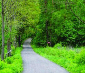 Trasa nr 25 Polna (zielona)