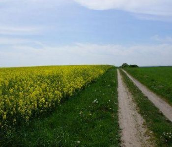 Route no. 29 Nowa Wieś Lęborska (red)