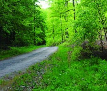 Route no. 35 Bolszewska (yellow)