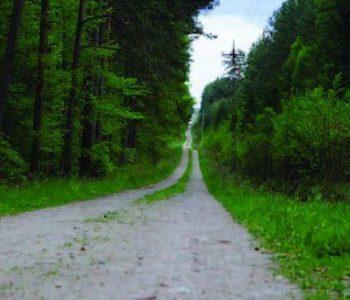 Trasa nr 36 Leśną Drogą (zielona)