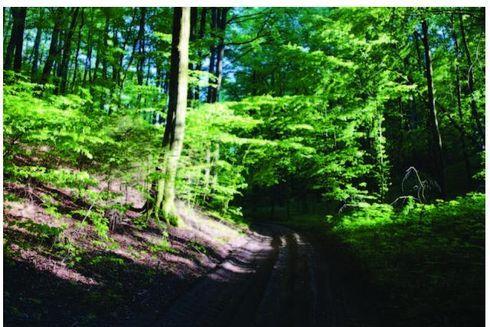 Route no.38 Ku Górze Pomorskiej (black)