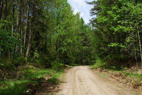 Route no. 41 Wicko (black)