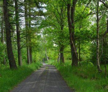 Trasa nr 9 Dąbrówka (zielona)