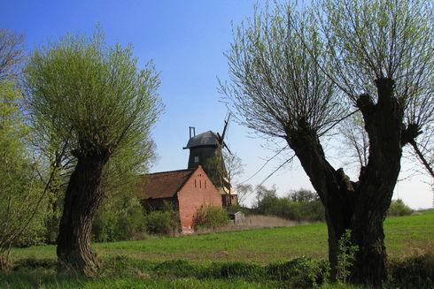 Wiatrak holenderski w Palczewie