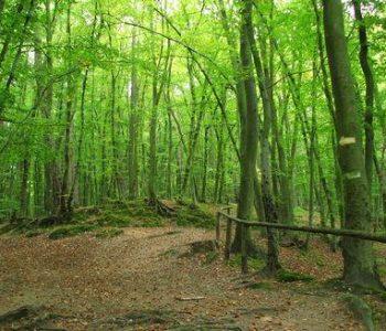 Zajęcze Wzgórze in Sopot