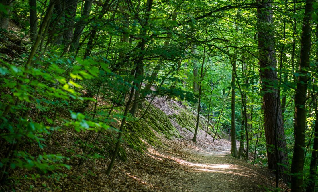 Około 90% powierzchni Trójmiejskiego Parku Krajobrazowego zajmują lasy, co w połączeniu z charakterystyczną rzeźbą terenu decyduje o niepowtarzalnym krajobrazie parku. Fot Mateusz Ochocki