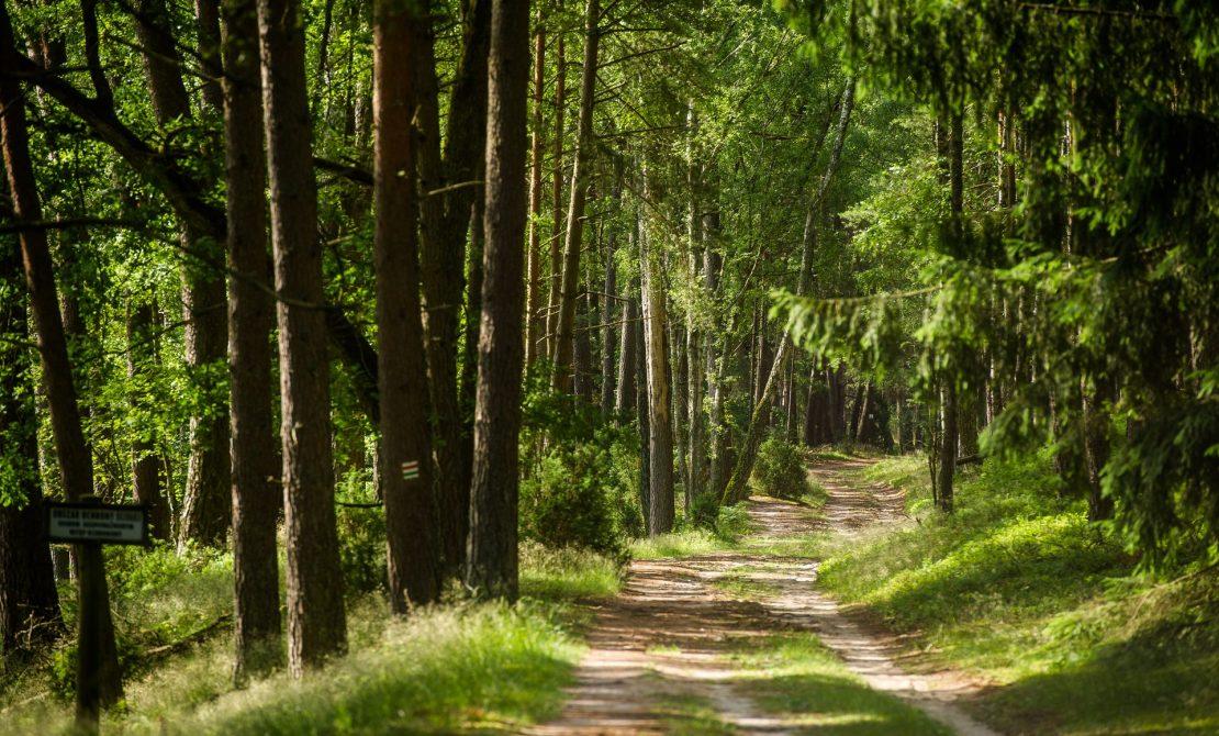 Park Narodowy Bory Tucholskie, fot. Pomorskie Travel/M.Ochocki